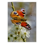 Peacock Butterfly - Butterfly On Hawthorn Flower - Card