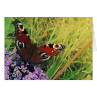 Peacock Butterfly Greeting Cards