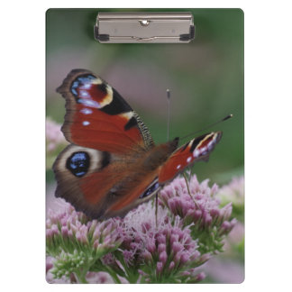 Peacock Butterfly Clipboard