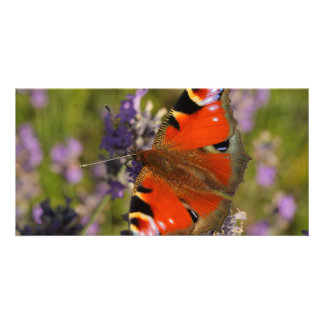 peacock butterfly customized photo card