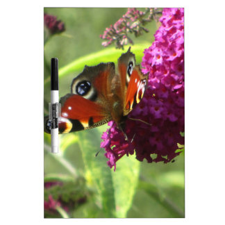 Peacock Butterfly Dry Erase Boards