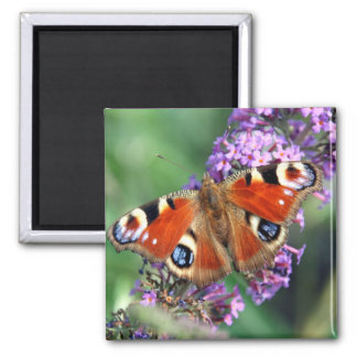 Peacock Butterfly Flower Square Magnet