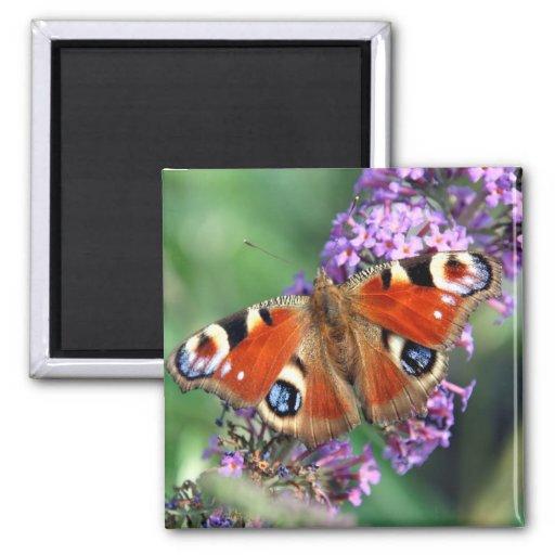Peacock Butterfly Flower Square Magnet Fridge Magnet