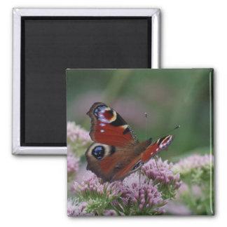 Peacock Butterfly Fridge Magnet