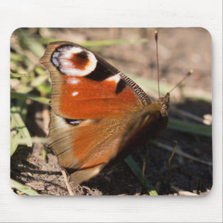 Peacock Butterfly Mouse Mat