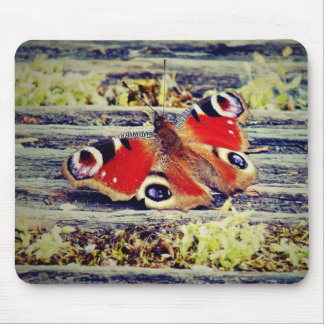 Peacock butterfly mouse pad