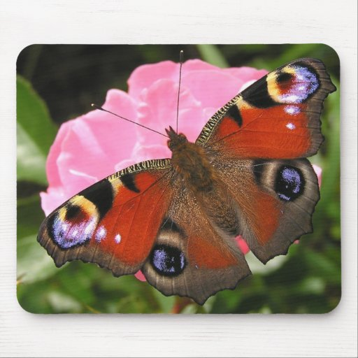 Peacock butterfly mouse mats