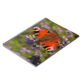peacock butterfly note book