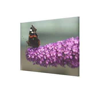 Peacock butterfly on flower canvas print