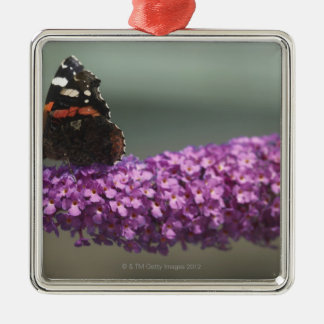 Peacock butterfly on flower christmas ornament