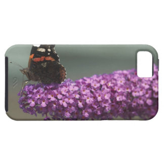 Peacock butterfly on flower iPhone 5 cases