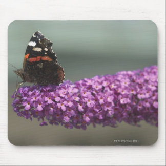 Peacock butterfly on flower mouse mat