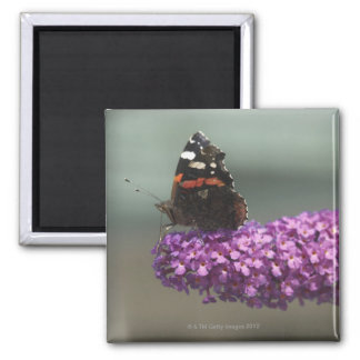 Peacock butterfly on flower square magnet
