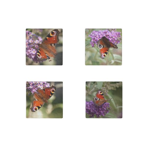 Peacock Butterfly on Summer Lilac Stone Magnet