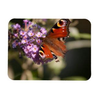 Peacock Butterfly on Summer Lilac Rectangular Photo Magnet