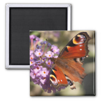 Peacock Butterfly on Summer Lilac Square Magnet