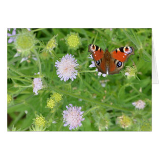 Peacock Butterfly over flowers Greeting Card