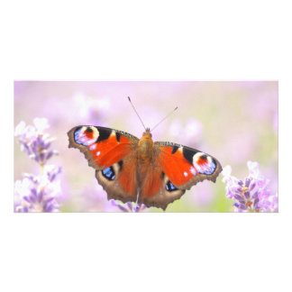 peacock butterfly over lavender personalised photo card