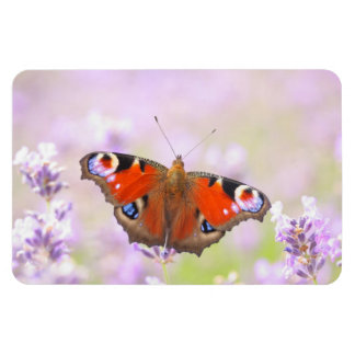 peacock butterfly over lavender rectangular photo magnet