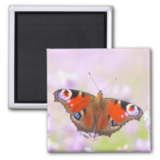peacock butterfly over lavender square magnet
