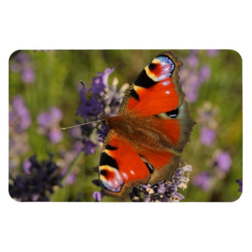 peacock butterfly flexible magnets
