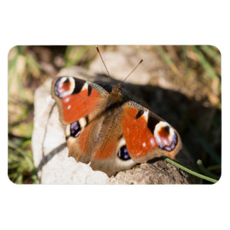 Peacock Butterfly Flexible Magnet