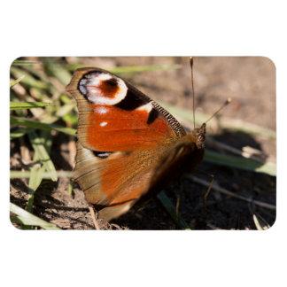 Peacock Butterfly Rectangular Photo Magnet