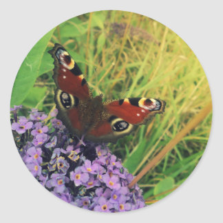 Peacock Butterfly Round Sticker