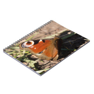 Peacock Butterfly Spiral Notebooks
