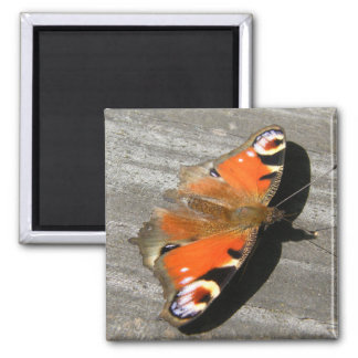 Peacock butterfly square magnet