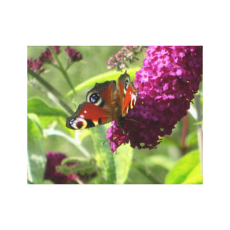 Peacock Butterfly Stretched Canvas Print