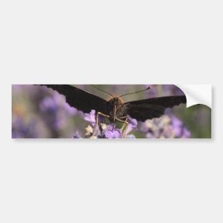 peacock butterfly sucking lavender nectar bumper sticker