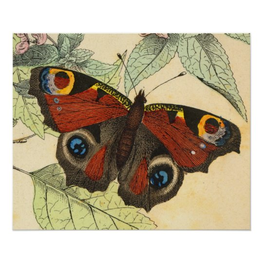 Peacock Butterfly - Vintage Art Poster