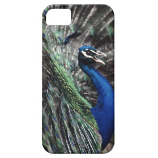 peacock case for the iPhone 5
