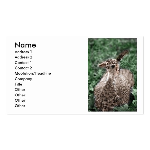 Peacock chick sitting in green grass looking up business card templates
