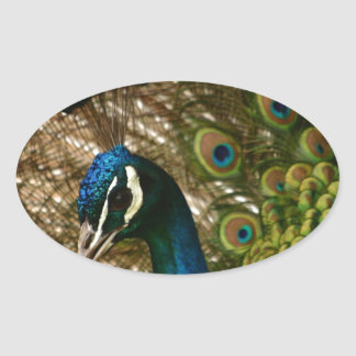 Peacock Closeup Oval Sticker