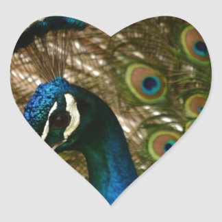 Peacock Closeup Heart Sticker
