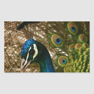 Peacock Closeup Rectangular Sticker