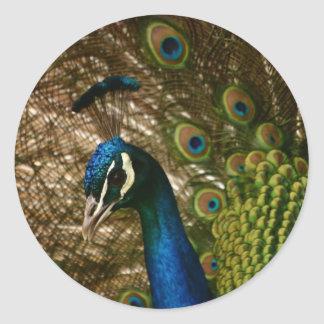 Peacock Closeup Round Sticker