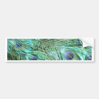 Peacock colours bumper sticker
