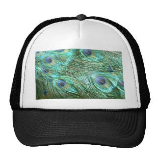 Peacock colours cap