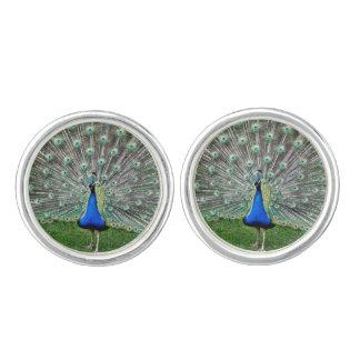 Peacock Cuff Links