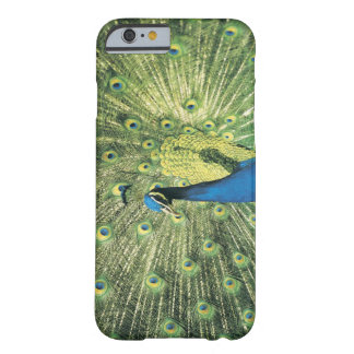Peacock displaying barely there iPhone 6 case
