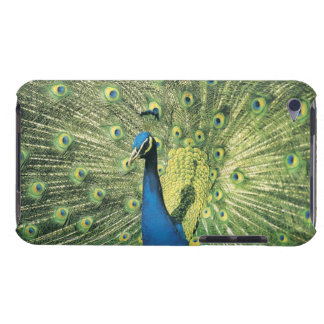 Peacock displaying barely there iPod cover