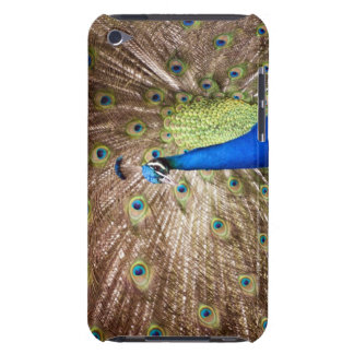 Peacock displaying plumage Case-Mate iPod touch case