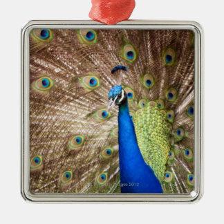Peacock displaying plumage christmas ornament