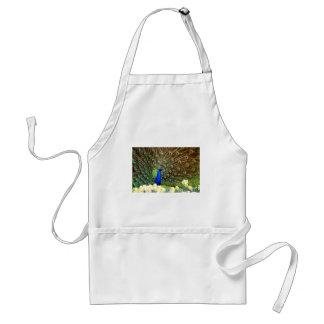 Peacock displays apron