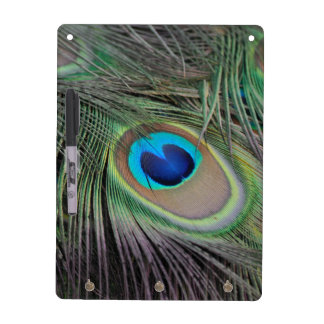 Peacock Dry Erase Boards