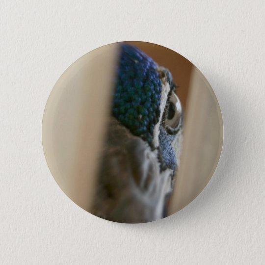 Peacock eye through wooden gate slats 6 cm round badge