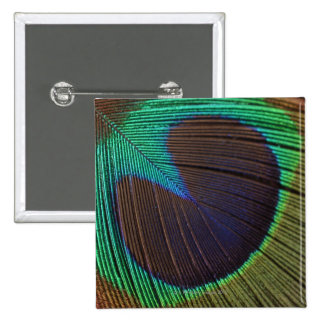 Peacock feather 15 cm square badge